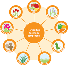 Graphic - Horticulture has many components